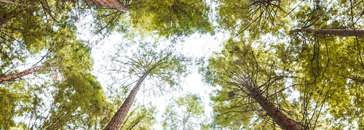 Forest Bathing Hike | Silent Serenity