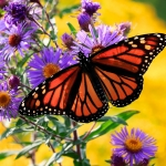 A monarch butterfly perches on a purple flower. Yellow flowers are seen in the background.